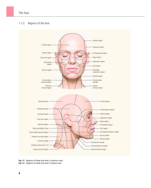 The Face - Pictorial Atlas of Clinical Anatomy - Archidemia